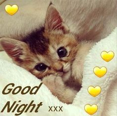 Good Day Quotes: Good Night Sister and allhave a restful sleep God bless. Night Night Sleep Tight, Good Night Sister, Good Night Thoughts, Good Night Beautiful, Good Night Prayer, Good Night I Love You, Good Night Blessings, Dream Night, Good Night Sweet Dreams