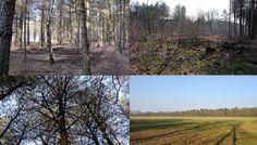 Bosgebied de Maashorst