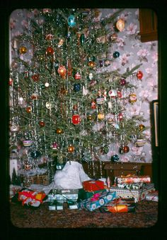 Live Christmas Trees, Beautiful Christmas Trees, Christmas Past, Christmas Morning, Vintage Christmas Photos, Xmas Photos, Vintage Holiday, Christmas Pictures, Holiday Ideas