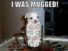 """""""Mugged"""" dog!"""