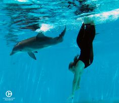 Hope Dolphin & her care provider engaging in some underwater play in 2011. Hope has grown so much since her arrival to Clearwater Marine Aquarium! ‪#‎TBT‬