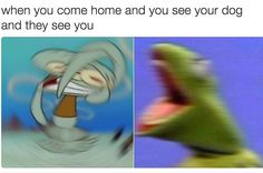 When You Come Home And See Your Dog And He Sees You - Funny Memes. The Funniest Memes worldwide for Birthdays, School, Cats, and Dank Memes - Meme Memes Humor, Dog Memes, Dankest Memes, Dog Funnies, Dog Humor, Meme Meme, Funny Humor, Stupid Funny Memes, Funny Relatable Memes