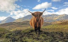 Our 1 day tour from Edinburgh takes you to Loch Lomond, the Trossachs National Park and Stirling Castle and introduces you to the land and legends of Scottish heroes William Wallace and Rob Roy. Travel with Tourboks.