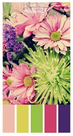 Digital Harmony Design Studio - Color Palette (pink, yellow, purple)