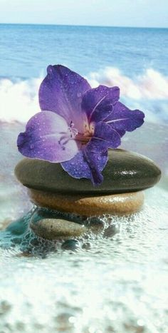 How to Take Good Beach Photos Beautiful Flowers, Beautiful Pictures, I Love The Beach, All Things Purple, Tropical Paradise, Shades Of Purple, Meditation, Scenery, Wallpapers