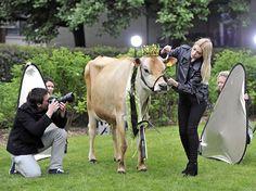 STRANGE FARM FUN - PHOTO SHOOT FOR THE COW QUEEN BEAUTY!