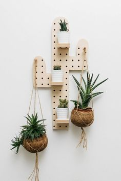 Goal: display your cacti on a cactus pegboard.