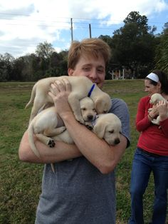 I want a yellow lab puppy ! haha