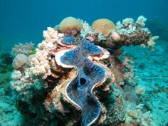 Dive into the Great Barrier Reef with Blue Dive! | Global Adventuress