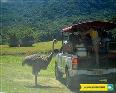 Fazendo a recepção dos visitantes aqui no Safári!  #lugardeserfeliz #boatarde  Reserve já → http://portobelloresort.com.br/promo/promocao-especial-abril/