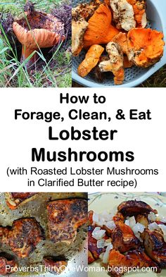 How to Forage, Clean, & Eat Lobster Mushrooms (with Roasted Lobster Mushrooms in Clarified Butter recipe) Edible Wild Mushrooms, Growing Mushrooms, Stuffed Mushrooms, Lobster Mushroom, Mushroom Cultivation, Edible Wild Plants, Mushroom Hunting, Wild Edibles, Mushroom Recipes