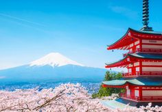 Wondering how to spend 2 weeks in Japan for your first time? Here's my recommended day-by-day itinerary outlining sights, costs, where to stay & useful tips