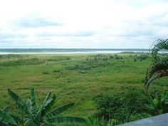 """""""Dry"""" Amazon River, in the flood season the water covers the green field. Iquitos, Loreto Peru."""