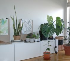 Urban Jungle Bloggers: My Plant Gang by @bitmeantime