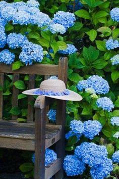 Hortensie / Hydrangea + Bank / Gartenbank / Parkbank - Bench in the Park / Garden Bench