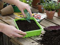 Comment semer en terrine ? Les explications des experts en jardinage de Rustica.