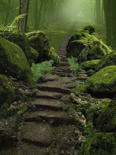 Sherwood Forest is a Royal forest in Nottinghamshire, England. It is famous through its historical association with the legend of Robin Hood. Courtesy: Earth Porn