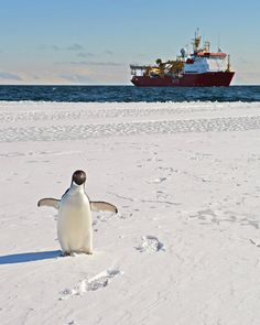 HMS Protector (and a curious friend) viewed from Inexpressible Island [2400 x 3000]