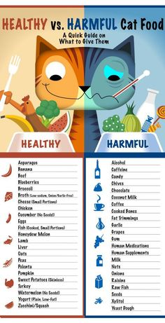 Healthy & Harmful Foods for Cats