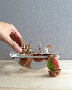 schaeresteipapier: Baumnussboote mit Segeln aus Blättern