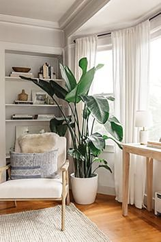 Favorite Indoor Plants Harlowe James - Floor Plants - Ideas of Floor Plants - Favorite Indoor Plants Harlowe JamesHarlowe James Large Indoor Plants, Indoor Floor Plants, Tall Indoor Plants, Indoor Tree Plants, Indoor Plant Decor, Patio Plants, Flowering Plants, Potted Plants, Birds Of Paradise Plant