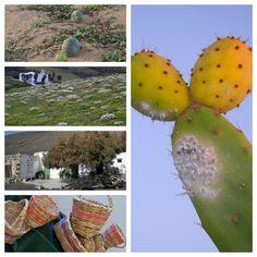 Recursos para un turismo de naturaleza en Canarias