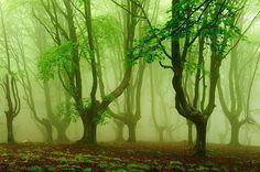 Oiartzun (País Vasco). Bosque  lleno de historias mitológicas. Poblado de hayas trasmochas y combinado con la niebla en los días de humedad, adquiere un aire misterioso.