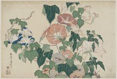 Title:朝顔に雨蛙 Morning Glories and Tree Frog Artist:葛飾北斎 Katsushika Hokusai