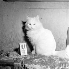 Earning medals and stuff… | Community Post: In 1947 This Lady Had A Seeing Eye Cat