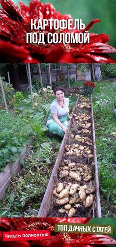 Permaculture, Potatoes, Outdoor, Gardens, Gardening, Blue Prints, Tips, Outdoors, Potato