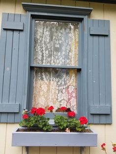 Red geraniums in blue window boxes