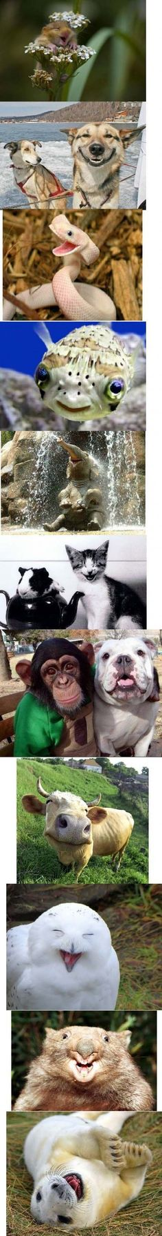 Isn't it amazing how comforting animals are?     From: http://quicklol.com/wp-content/uploads/2012/02/happy-animals.jpg