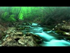 FOREST CREEK Nature Sounds | 11 Hours (For stress relief, relaxation & sleeping) - YouTube