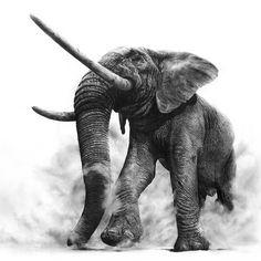 'The King' - 180 x 120 cm #pencil #drawing #elephant #art #arts_help
