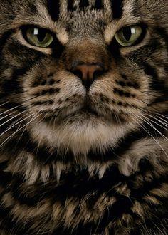 Jean-Pierre Collin  #cat