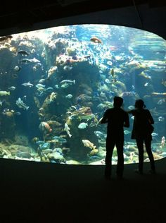 California Academy of Sciences | The perfect excursion for curious minds, young and old alike will delight in the 400,000 square feet of discovery on offer at the California Academy of Sciences. Located in Golden Gate Park, this international hub for scientific research and education's new facility houses an aquarium, a planetarium, a natural history museum and even a 4-story rainforest…