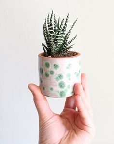 Small Cacti Planters, Lily Jade, www.babasouk.ca