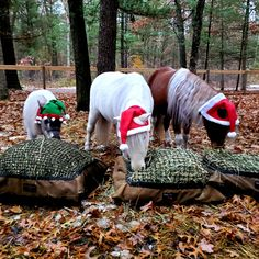 May your neighs be merry and bright. 🎄🎁 Happy Holidays! Slow Feeder, Easy Fill, Net Bag, Merry And Bright, Happy Holidays, Happy Holi
