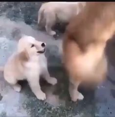 Get Your Dog To Do Amazing Tricks With Our Simple Dog Training Techniques! - Dogs And Puppies - Funny Animal Videos, Funny Animal Pictures, Cute Funny Animals, Animal Memes, Cute Baby Animals, Funny Dogs, Animals And Pets, Nature Animals, Cute Puppies