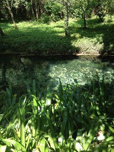 GORGAZZO Mountains, Nature, Plants, Travel, Italia, Naturaleza, Viajes, Destinations, Plant