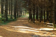 La Faggeta beech, pine and fir woods near Bagnaia and Soriano nel Cimino, Lazio - about 90 minutes from Rome