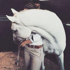 Dreaming of the best pony cuddles ☁ via Most Beautiful Animals, Beautiful Horses, American Quarter Horse, Dressage Horses, Horse Barns, Horse Photography, Horse Love, Horseback Riding, Horse Riding