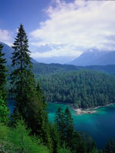 image by Walter Bibikow shows Sonnenspitze and the Wetterstein in Tyrol Austria with towering conifers in the foreground.