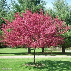 10 Great Trees to Consider Planting in Your Yard This Spring