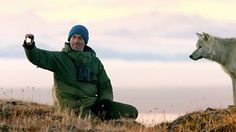 BBC Two - Snow Wolf Family and Me, Episode 2, Gordon Buchanan plays fetch with an arctic wolf named Scruffy
