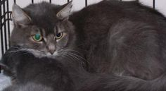 Chrissy is available for adoption from Olive Branch Animal Rescue & Refuge (http://www.olivebranchwv.org/ ; facebook.com/pages/Olive-Branch-Animal-Rescue-Refuge-Inc/201717546418) in Sistersville, West Virginia.