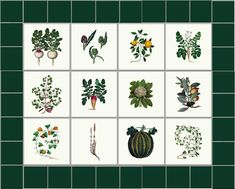 Tiles based on medieval herbals from Century Italy medieval manuscripts. Stone Bird Baths, Standard Roses, Garden Tiles, Outside Room, Kitchen Herbs, Medieval Manuscript, Growing Herbs, William Morris, 16th Century
