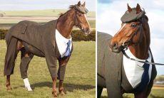 Да, это лошадь вкостюме. Британский дизайнер создал первый вмире твидовый костюм для коня
