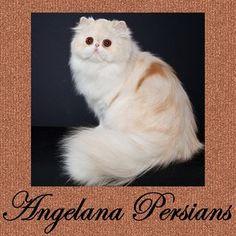 Angelana Persians