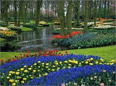 jardin de tulipanes en holanda